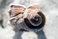 Shells-75-copy-200