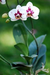 Orchids2-200